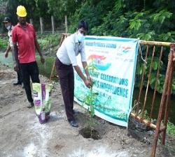 Tree Plantation by Addl.Manager -Mktg -MFL