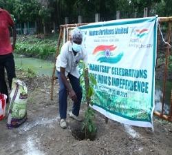 Tree Plantation by DGM- Tech-Service -MFL