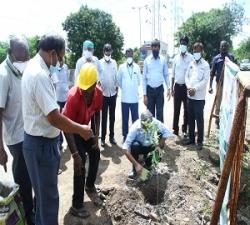 Tree Plantation by Director - Technical - MFL